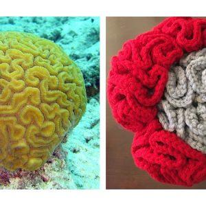 Crochet Brain Corals